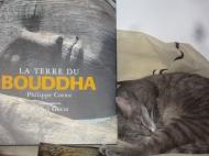 Buddha Lotti