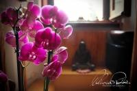 Orchidee per il Buddha