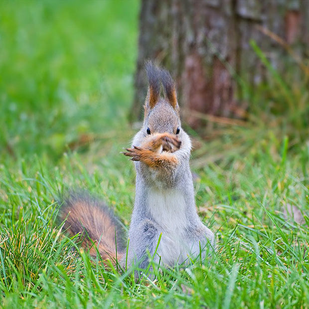 squirrel tai chi afo radio